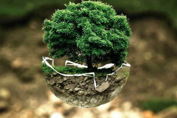 La Thaïlande projette de créer des forêts en larguant des millions d'arbres depuis des avions