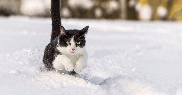 Un chat médium vendu pour 80.000 euros en Sibérie