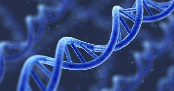 Un ADN inconnu découvert dans les îles du Pacifique