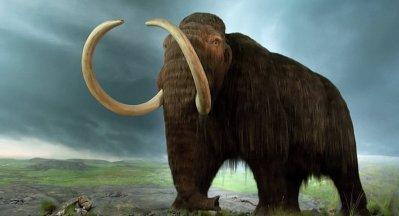 Ressusciter les mammouths: dans deux ans, selon des scientifiques