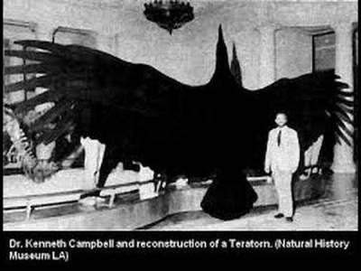 Un « oiseau de foudre » repéré par un homme en Californie