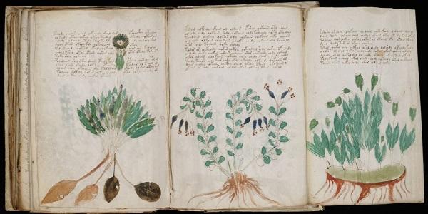 A-t-on trouvé la clé pour déchiffrer le manuscrit de Voynich ?
