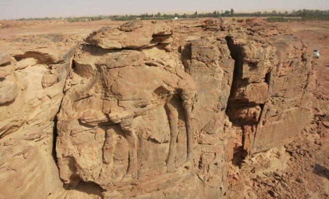 De monumentales sculptures de dromadaires découvertes dans le désert d'Arabie