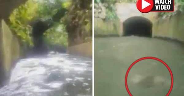 Vidéo: Un groupe d'amis a filmé leur périple sur une rivière – Ils ont été PÉTRIFIÉS par ce qu'ils ont découvert