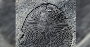 Découverte du plus ancien animal sur Terre