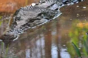 Un homme accusé de sorcellerie pour lancer des attaques de crocodiles au Mozambique