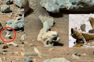 Des Ufologues ont repéré des « poissons fossilisés » sur Mars