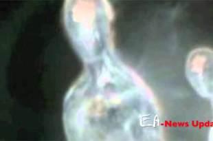 Un extraterrestre translucide observé à Porto Rico en 1998