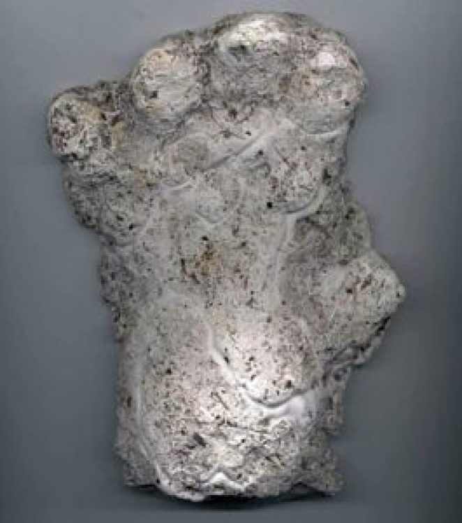Cast of an alleged orang pendek footprint