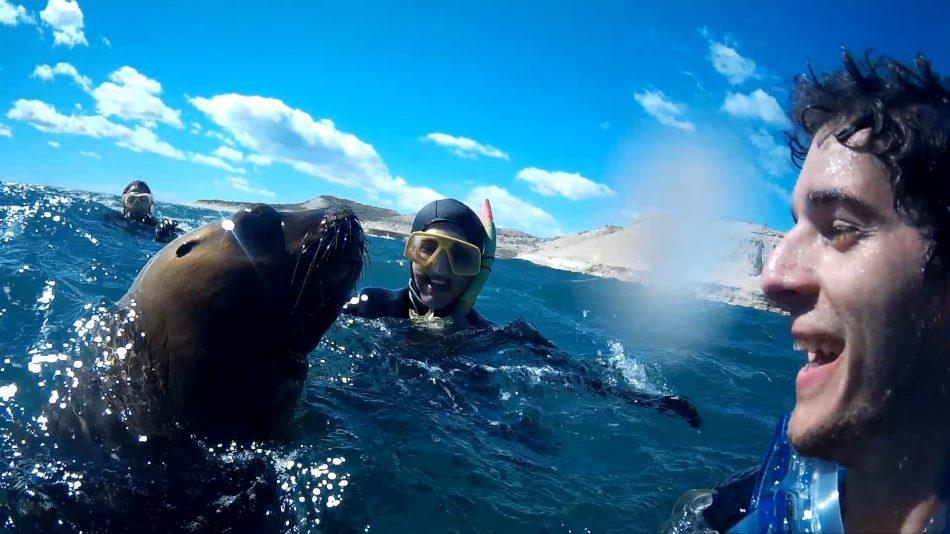 De frente com um lobo marinho: esse olhar romântico...
