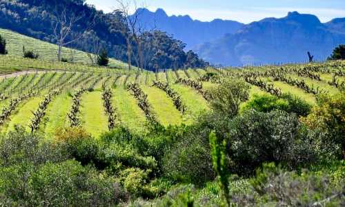 Stellenbosch Wine Route. South Africa.