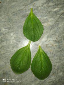 Planta de Atamel Para que sirve