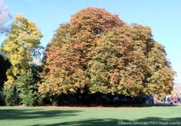 Lokakuussa puissa oli syksyn värejä.