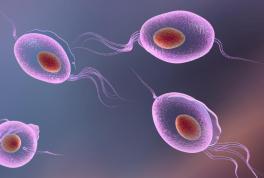Бак посев на трихомонады: обнаружение вируса в мазке