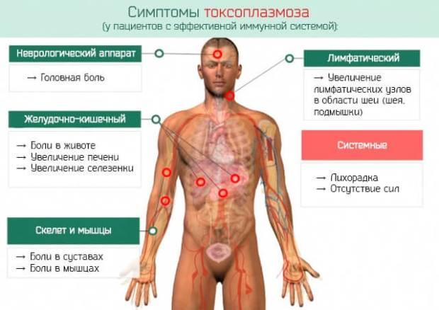 Токсоплазмоз у человека: признаки, симптомы и лечение