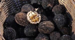 Черный орех - полезные свойства и применение
