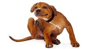 Стронгхолд для собак - инструкция по применению для капель