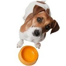 Глисты у щенков - симптомы, лечение и формы препаратов
