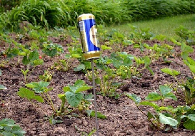 Как бороться с кротами на огороде. Неэффективные, но применяемые способы. Березовый деготь в огороде от кротов