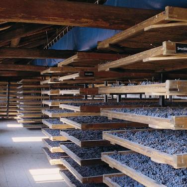 Chris Baker guest post: the Alighieri vineyard