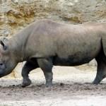 Bioparc - Zoo doué la fontaine