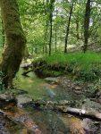 Qigong en forêt de Brocéliande