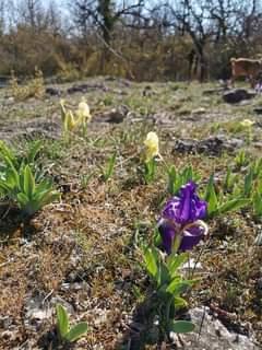 Petit Défis pour bien finir la semaine  Donnez le nom de ces 11 fleurs photograp…