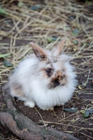 coniglietto ariete piccolo