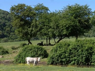 13 gennaio: la valle del Sorbo, patrimonio di biodiversità
