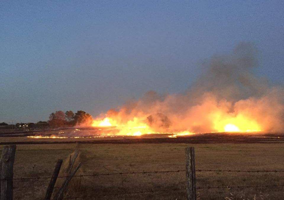 Vaste zone del Parco devastate dagli incendi