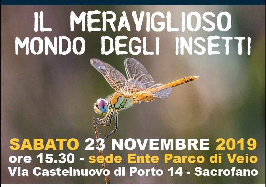 23 novembre. Il meraviglioso mondo degli insetti