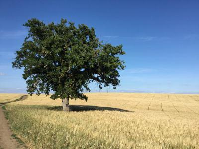 Festa dell'albero, ripiantumati alberi al pianoro di Veio