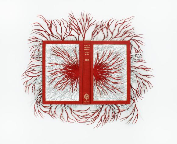 Vertebrate morphology, 2011 - Barbara Wildenboer