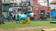 Day 141 - Cows in Little India.