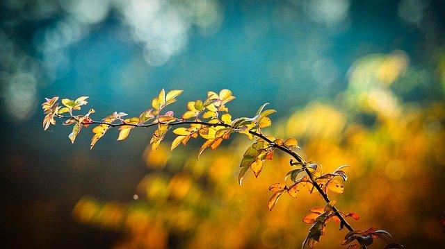 Branche aux feuilles jaunes
