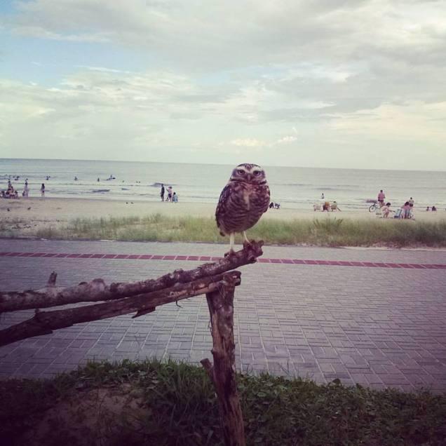 Ahhh sempre sábias, curtindo uma praia! Agora em Guaratuba #corujas
