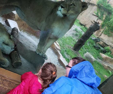 Who goes to the zoo when it's raining? JUMPSTART DOES!