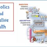Probiotics and Digestive Health