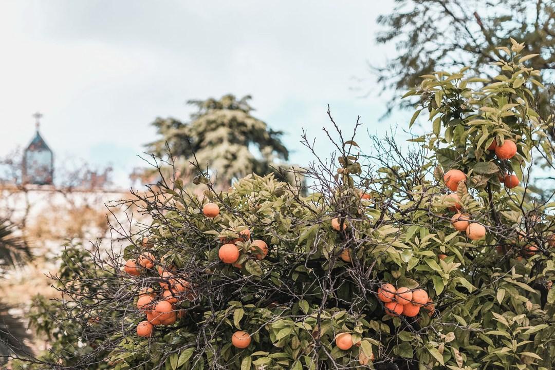 orangers de valencia