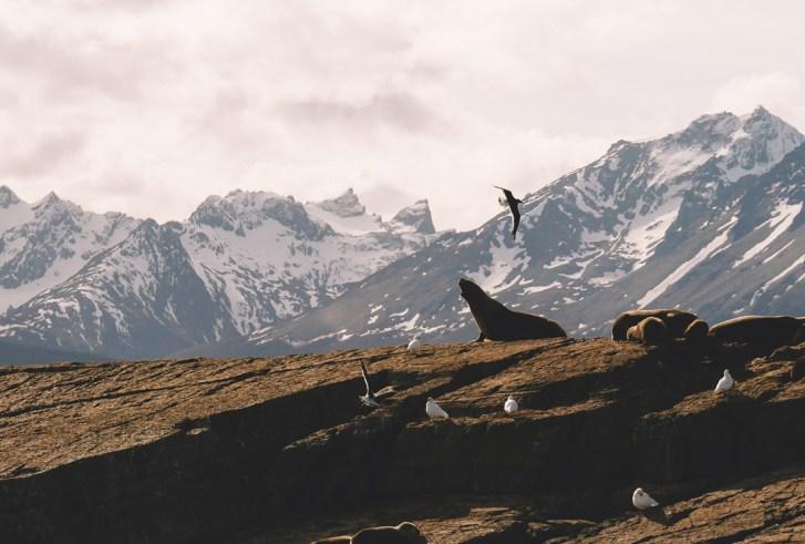 Ushuaia - Anne - Le Chien à Taches