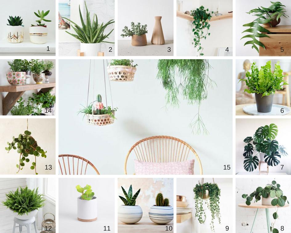 Végétalisez votre intérieur