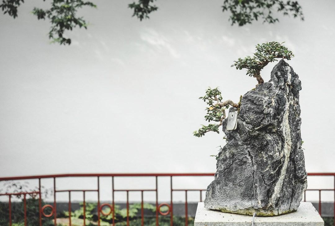 jardin céleste montréal