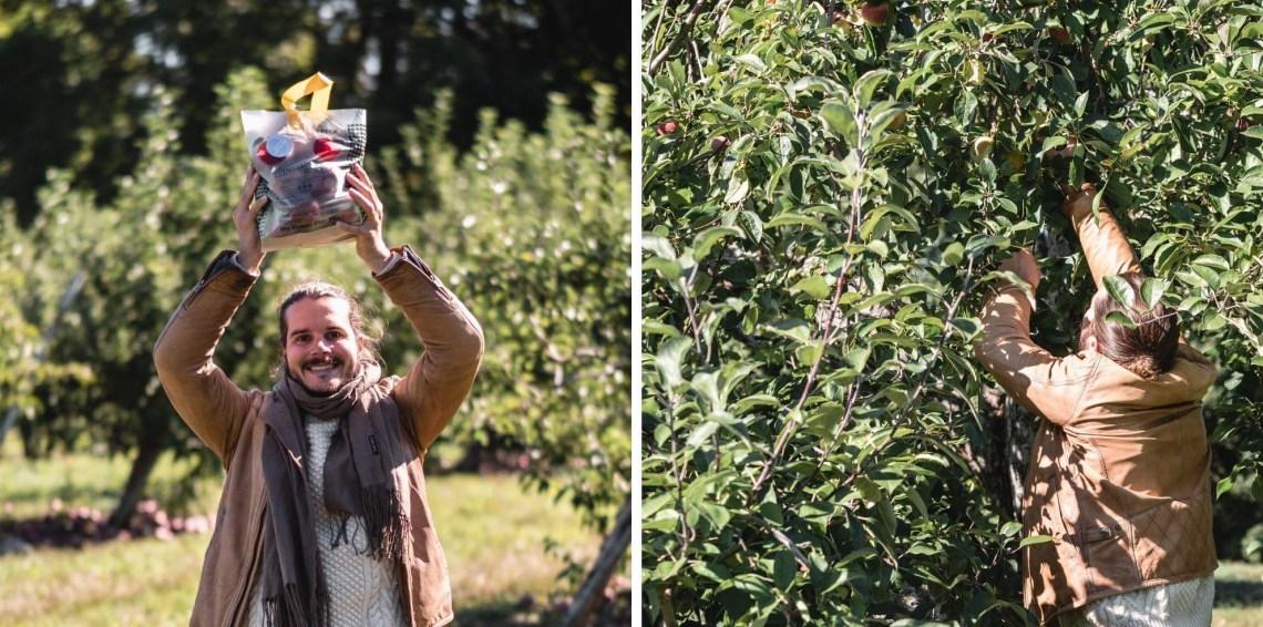 cueillette pommes nouvelle angleterre
