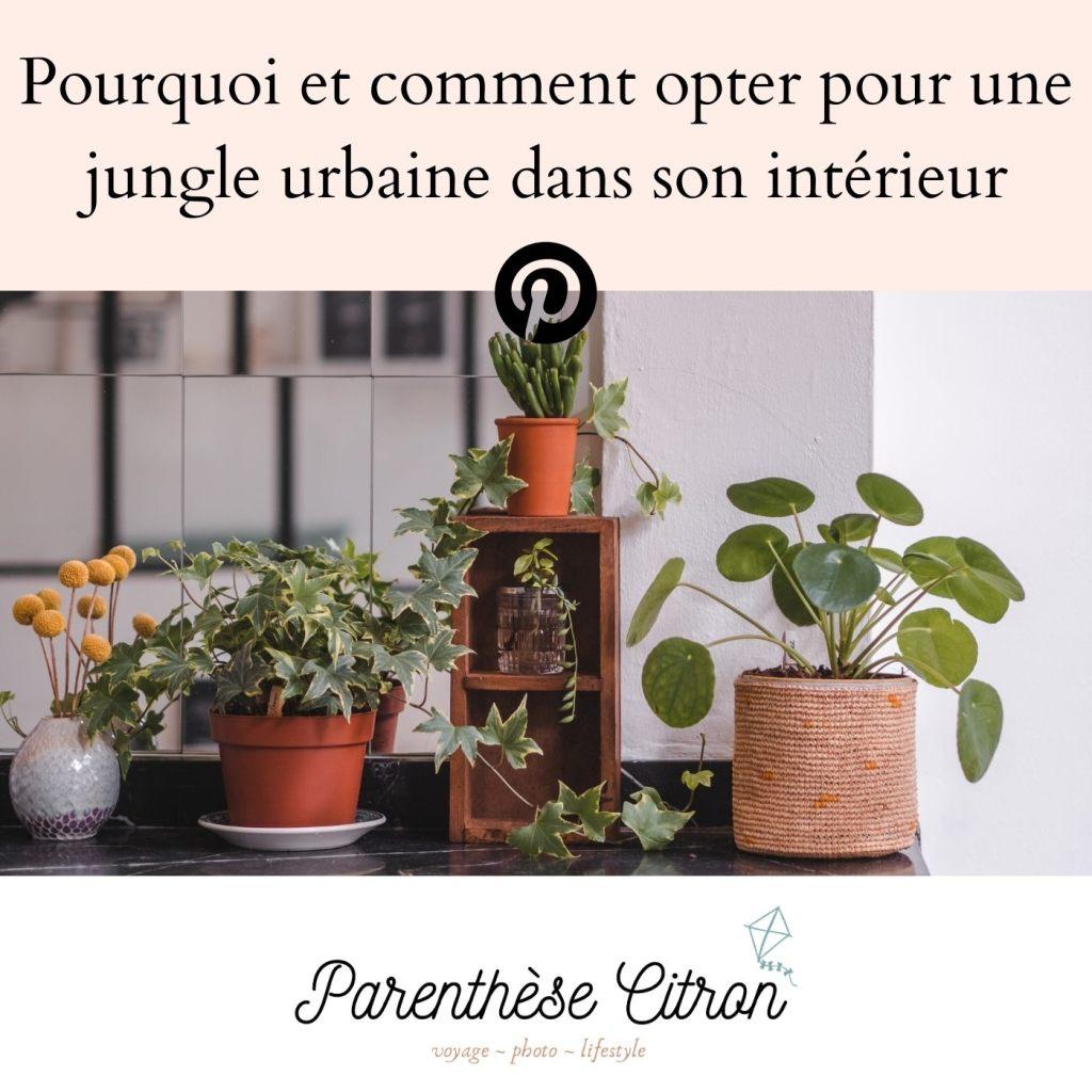 Créer une urban jungle chez soi pourquoi, comment