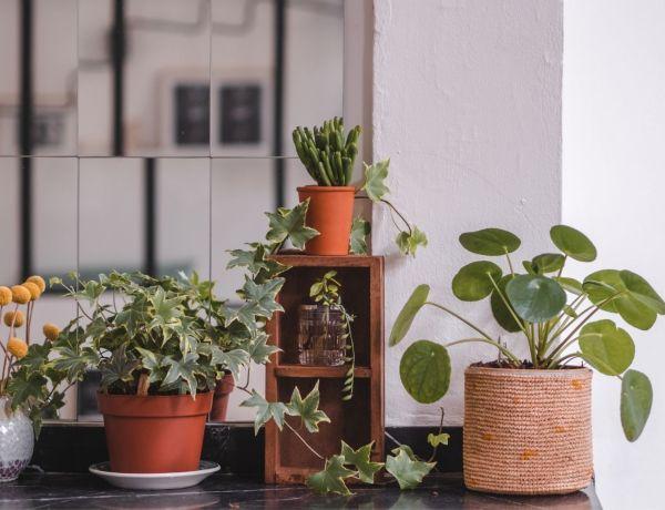 créer une urban jungle chez soi