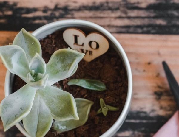 Créations-faites-main-pour-les-amoureux-des-plantes-sélection-100-Etsy