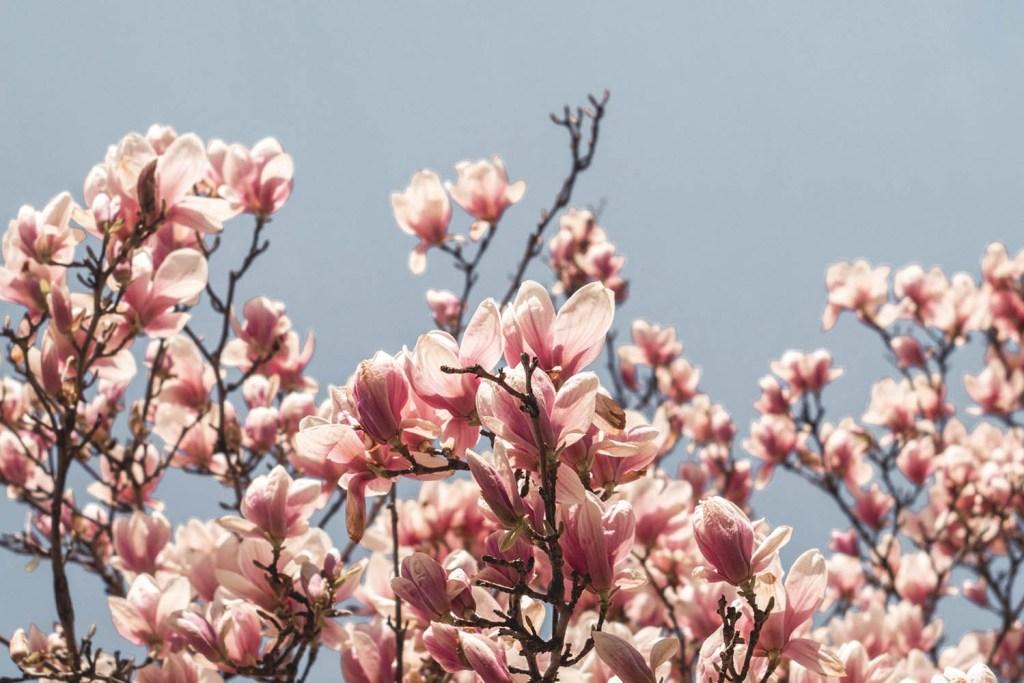 ou-admirer-le-printemps-a-boston