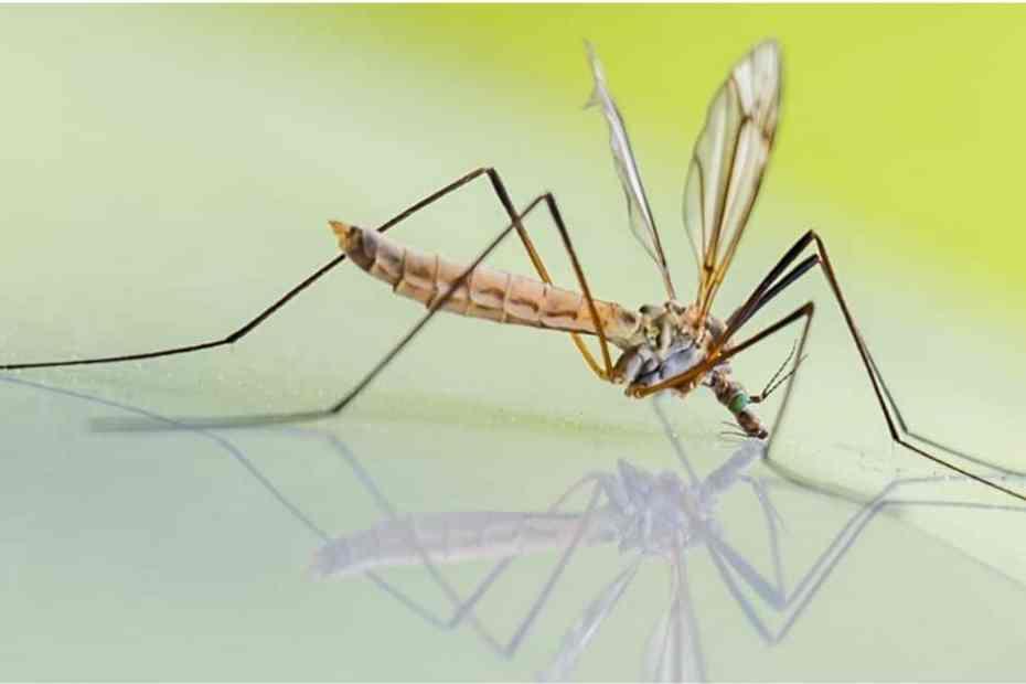 Comment se débarasser des moustiques en camping-car ?