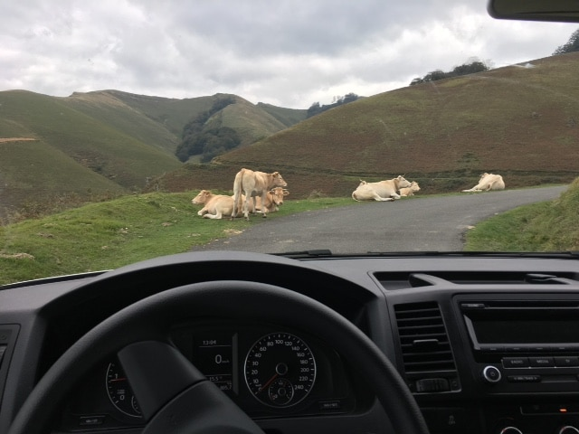 Paysage pastoral depuis le van