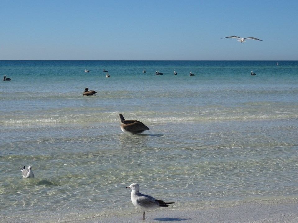 Siesta Key beach à Sarasota - Floride
